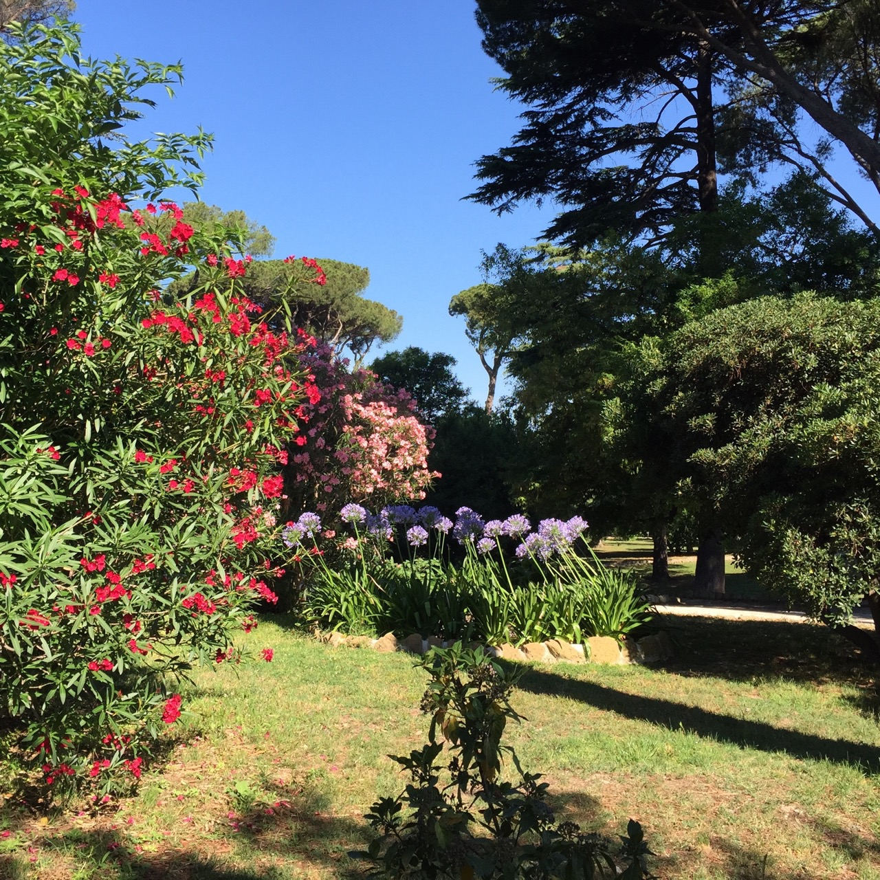 summer flowers in rome