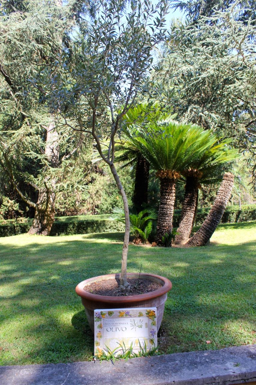 mini-garden of herbs and bush species