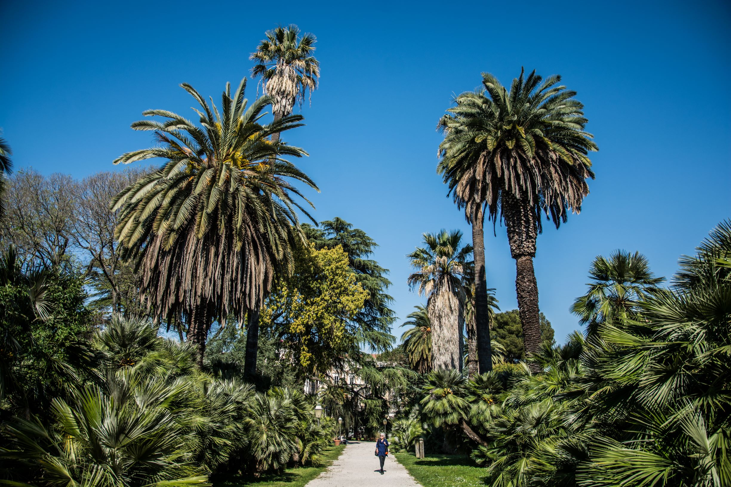 viale delle palme botanical gardens Rome