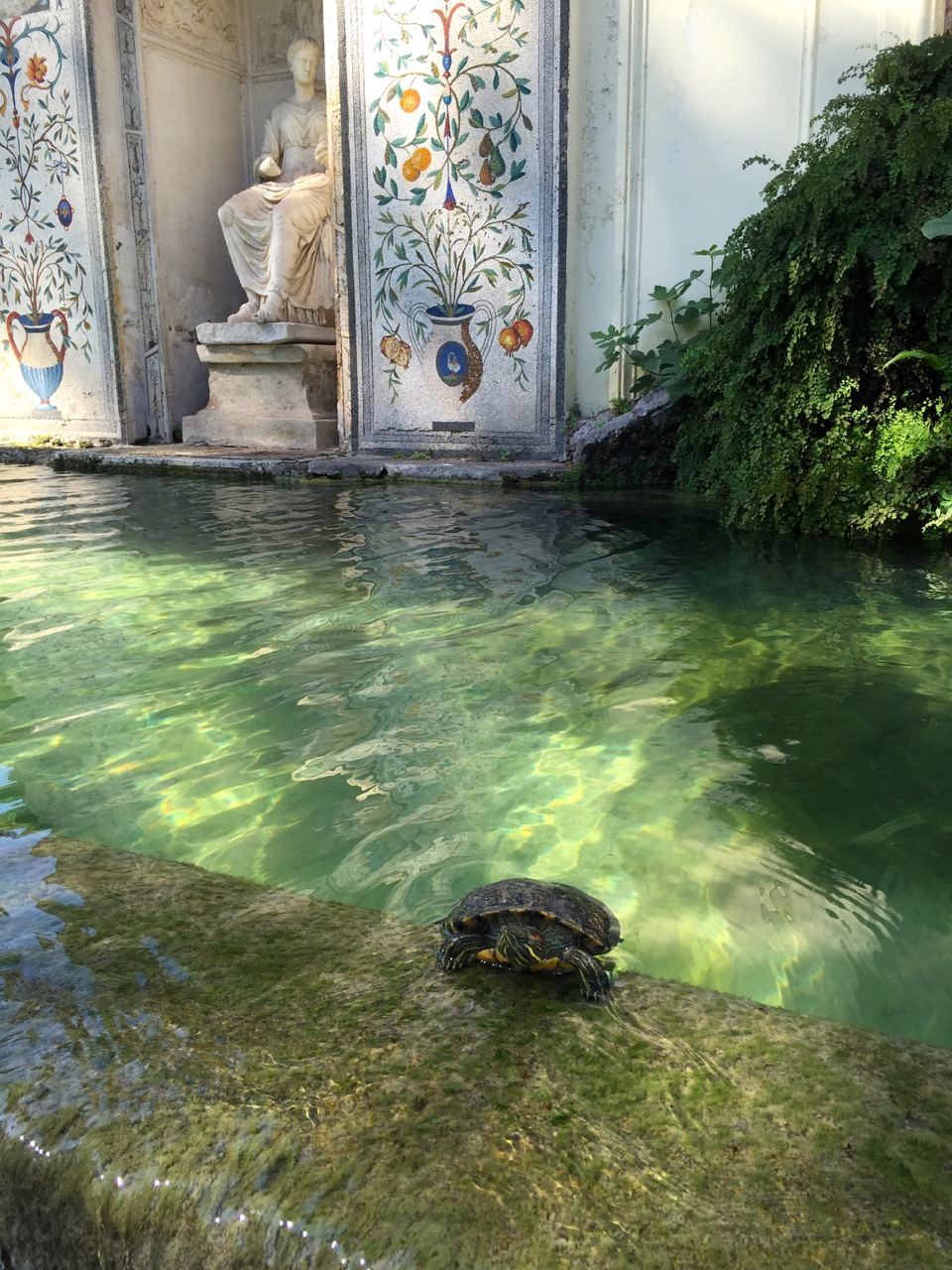 fountain in gardens at vatican, with turtle