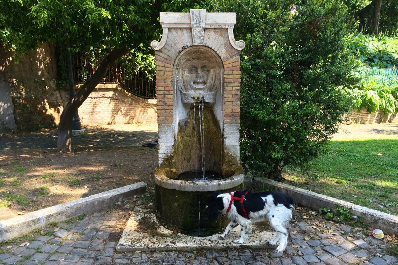 drinking fountain with dog fountain too