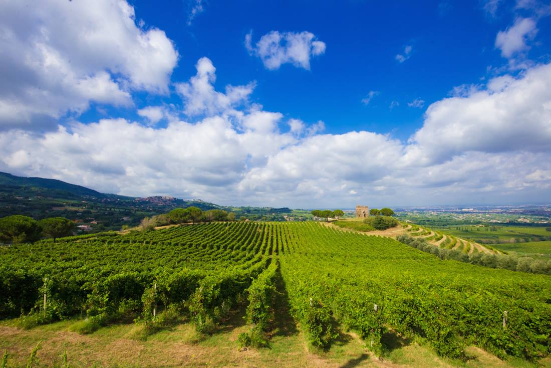rolling hills and vineyards in Frascati just outside Rome